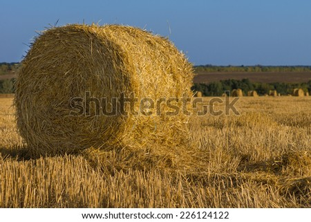 Freshly harvested and baled round golden hay bale in a farm field to be used as winter fodder for livestock - stock photo