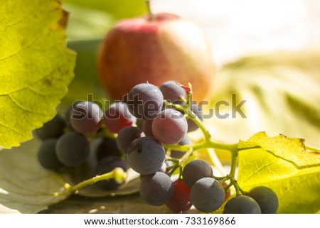 Freshly harvested black grapes and apple