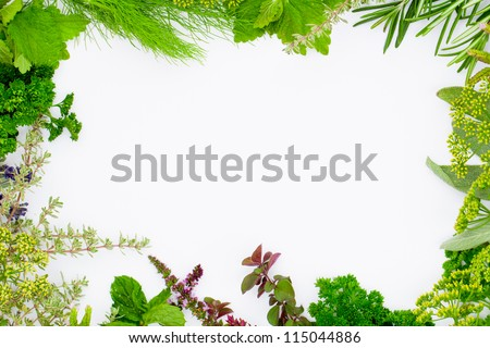 Freshly harvested herbs, herbs frame over white background - stock photo