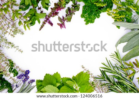 Freshly harvested herbs, herbs frame over white background (space for text) - stock photo