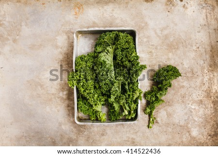 Freshly harvested kale cabbage stems ready to prepare vegetarian salad. Rustic dark style. - stock photo