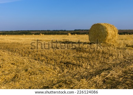 Freshly harvested round hay bales standing amongst the freshly mowed stubble of the grass on an agricultural field under a sunny blue summer sky - stock photo