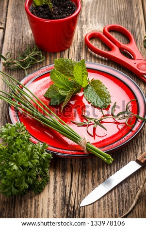 Freshly harvested spices with scissors and knife - stock photo