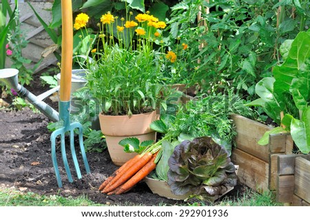 Freshly harvested vegetables in a small flower garden - stock photo