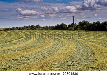 Freshly mown hay field under a dramatic sky - stock photo