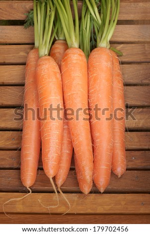 Freshly picked and washed carrots with their tops  - stock photo