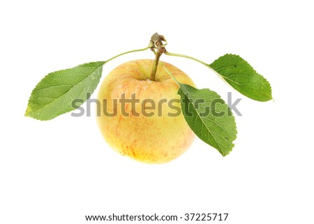 Freshly picked apple with leaves isolated on white