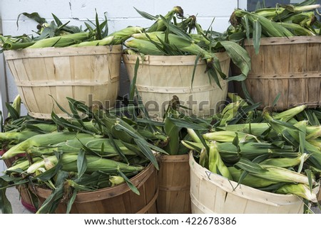 Freshly picked corn spill out of wood baskets at a rural farmers market. - stock photo