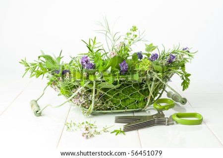 Freshly picked herbs in a wire basket with handles on a white background - stock photo