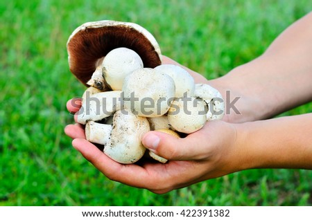 Freshly picked mushrooms in the hands of men on the background of green grass - stock photo