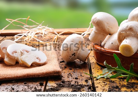 freshly picked mushrooms on a wooden table in the field prepared for cooking - stock photo