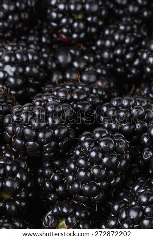 freshly picked organic blackberries