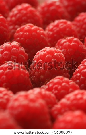freshly picked raspberries - stock photo
