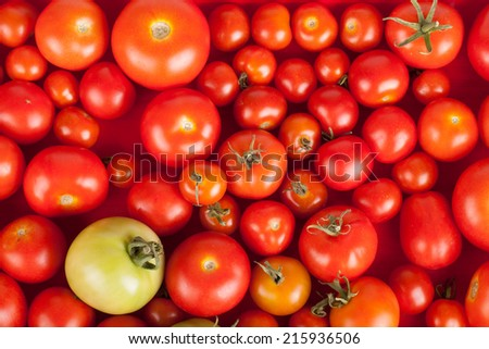 freshly picked red tomatoes in a box plus one green - stock photo