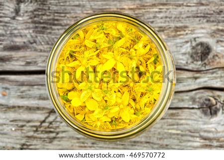 Freshly Picked St. John's Wort Herb