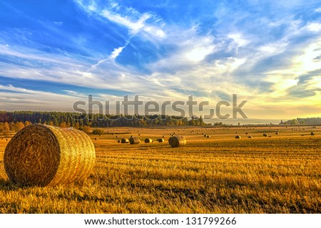 Freshly rolled hay bales in a field in North East Scotland - stock photo