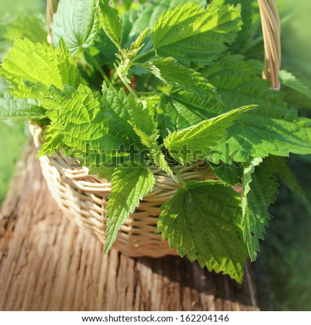 Freshly stinging nettles in basket - stock photo
