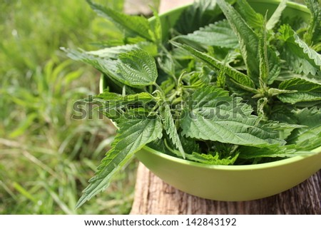 Freshly  stinging nettles in bowl ready for cooking - stock photo