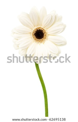 freshness beauty gerber on a white background - stock photo