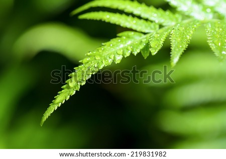Freshness of water drops on green fern leaves after rain - stock photo