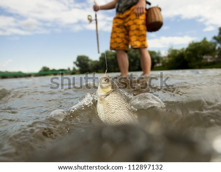 Freshwater chub caught in a small river. - stock photo