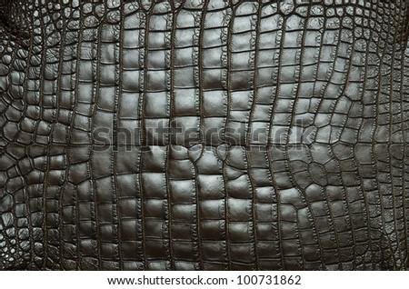 Freshwater crocodile belly skin texture background. - stock photo