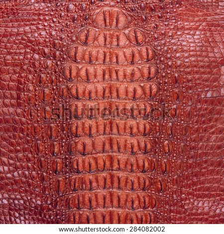 Freshwater crocodile bone skin texture - stock photo