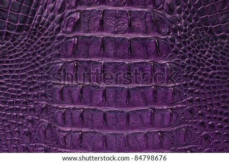 Freshwater crocodile bone skin texture background. - stock photo