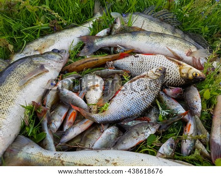 Freshwater fish on the grass