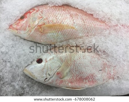 Freshwater fish soaked in ice in the market.