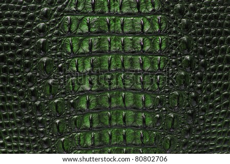 Freshwater green crocodile bone skin texture background. - stock photo