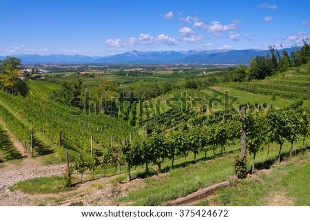 Friaul vineyards in northern Italy - stock photo