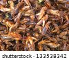 Fried insects are regional delicacies in many Asian countries like Cambodia, Thailand... - stock photo