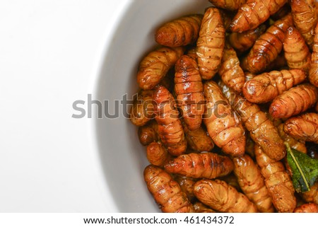 fried insects in cup on white