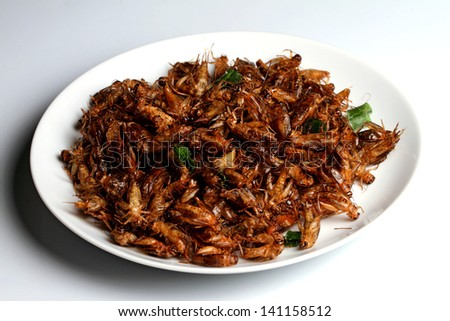 Fried insects on White dish, Fried insects are regional delicacies in Thailand - stock photo