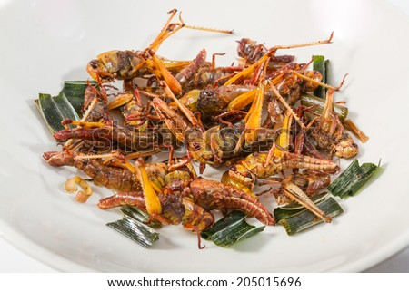 Fried insects. Protein rich food  - stock photo