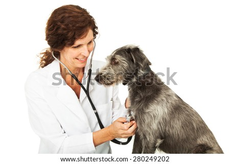 Friendly and happy female professional veterinarian doctor examining a mixed breed dog - stock photo