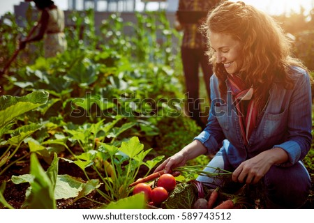 Friendly Team Harvesting Fresh Vegetables From The Rooftop Greenhouse  Garden And Planning Harvest Season On A