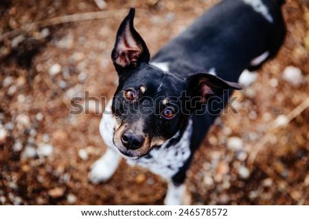 Friendly Terrier Dog - stock photo