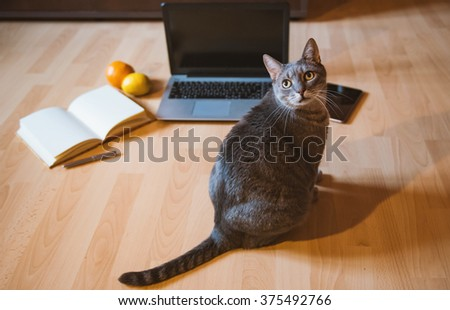 Friendly workspace: cat on a floor with a laptop and an agenda. - stock photo