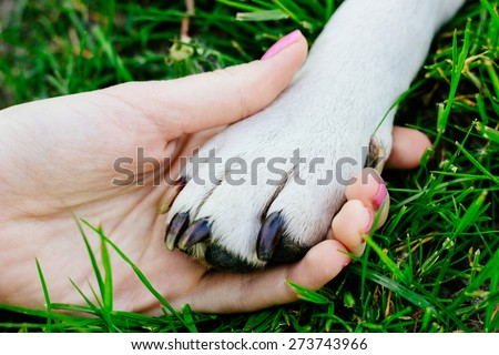 Friendship between human and animal, dog give woman paw, handshake - stock photo