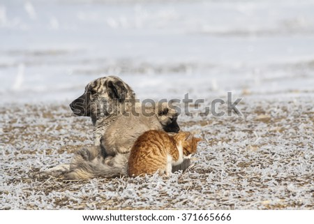 friendship dog and cat - stock photo
