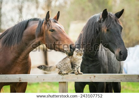 Friendship of cat and horses - stock photo