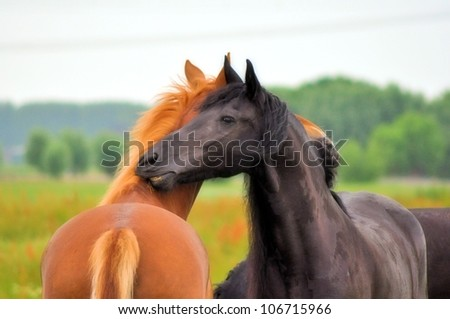 Friesian and friend hugging - stock photo