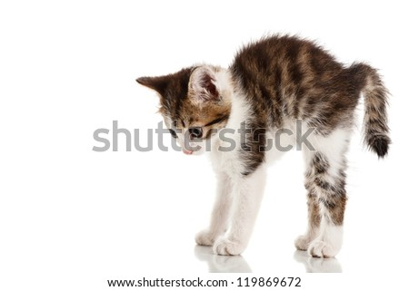 Frightened furry kitten looking down isolated on white background