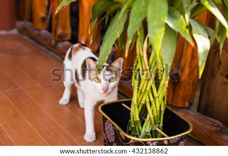 frightened or surprised cat - stock photo