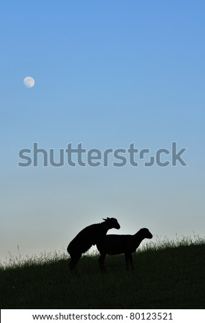 Frisky, sheep silhouettes under full moon, family farm, Webster County, West Virginia, USA - stock photo