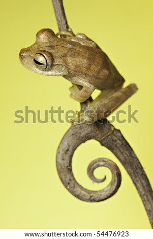 frog amphibian treefrog rainforest branch copy space background