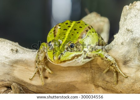 Frog And Branch - stock photo