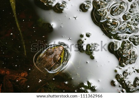 Frog and Bubbles - stock photo